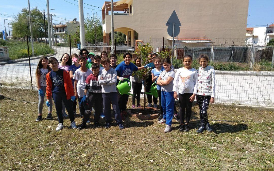 Σχολική Εβδομάδα Εθελοντισμού: 52o Δημοτικό Σχολείο Πάτρας