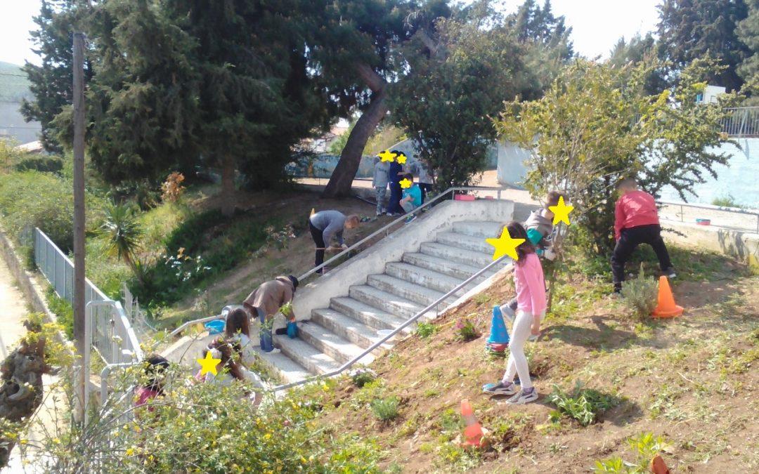 10ο Δημοτικό Σχολείο Χαλκίδας – Καλλωπισμός του σχολικού κήπου